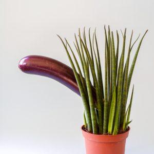 vegetable-behind-plant-3773664