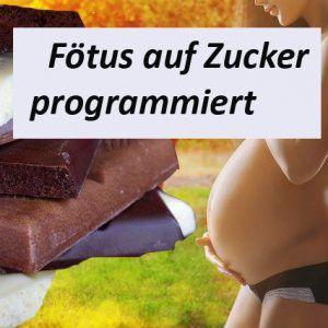 Fötus auf Zucker programmiert