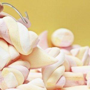 mice-bacon-2643820_640